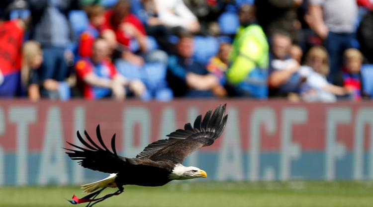 Palace use garlic to ward off Selhurst Park pitch parasites